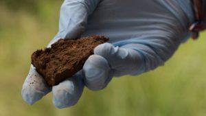 Biorremediación de suelos contaminados costa rica