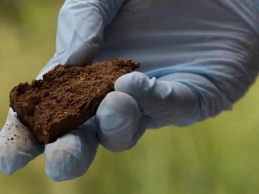 Biorremediación de suelos contaminados
