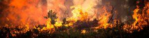 gestión del riesgo planes de emergencia costa rica