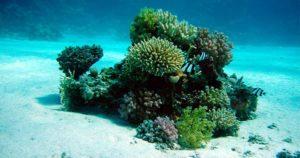 salvemos los corales del mar tatiana vega covid-19